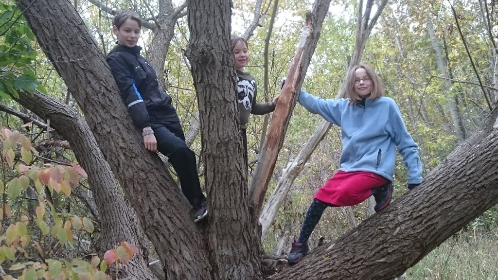 kids-in-a-tree-title