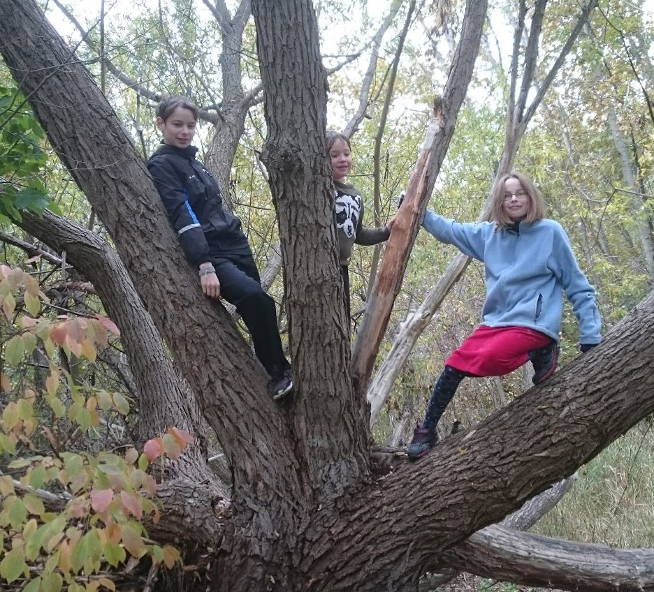 kids-in-a-tree