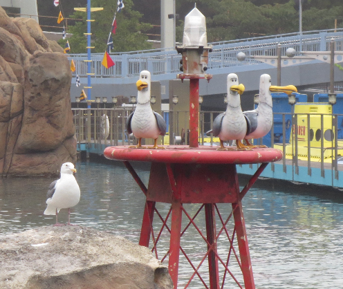Three animatronic seagulls and one real