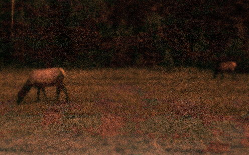 Elk at Twilight