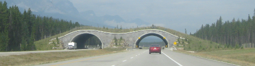 Animal Overpass