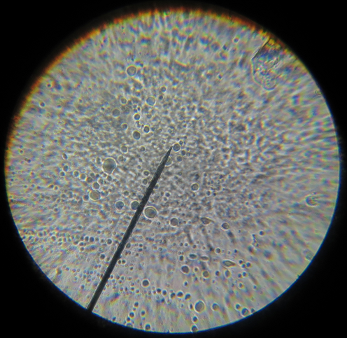Cells 40x magnification
