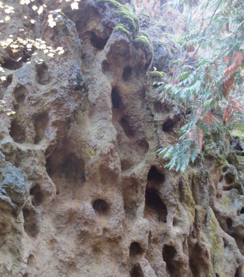 Holey Sedimentary Rock