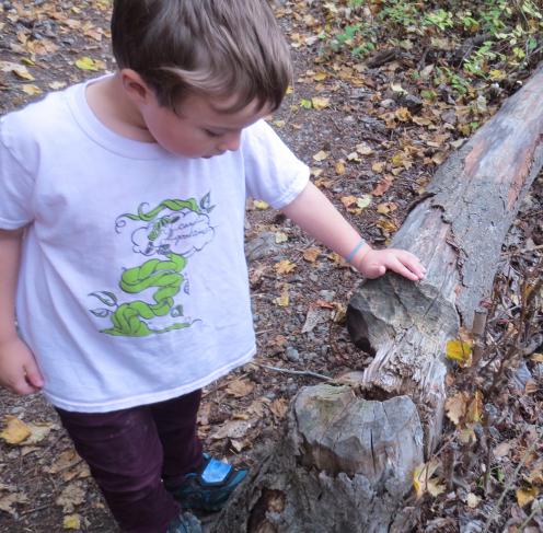 Ian Examining A Beaver Tree