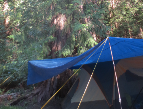 Our Campsite Under a Big Cedar Tree