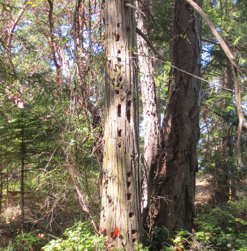 Woodpecker Tree