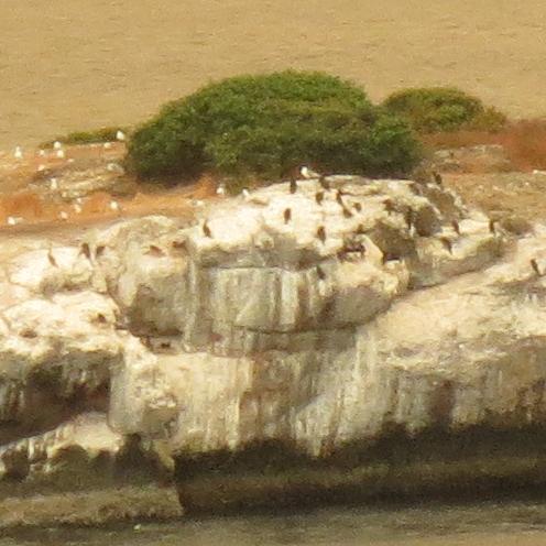 Bird Island Zoomed
